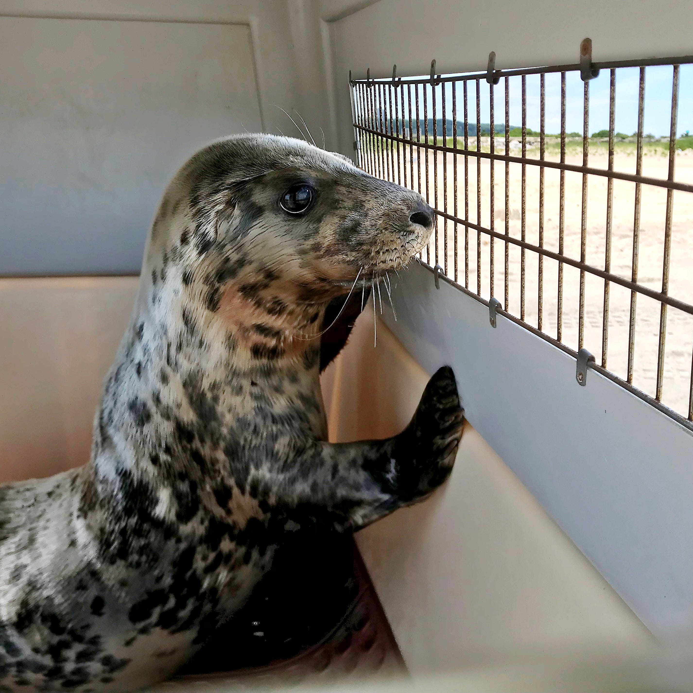 Three seals found in Monmouth County. Only one is alive.