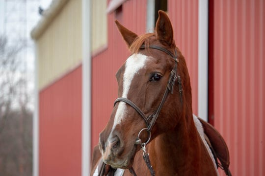 Memphis, a chestnut Dutch Warmblood gelding, is one of five horses being sold by Winton Woods Riding Center in a sealed bid process.