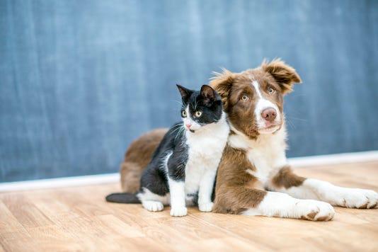 Pet Friends