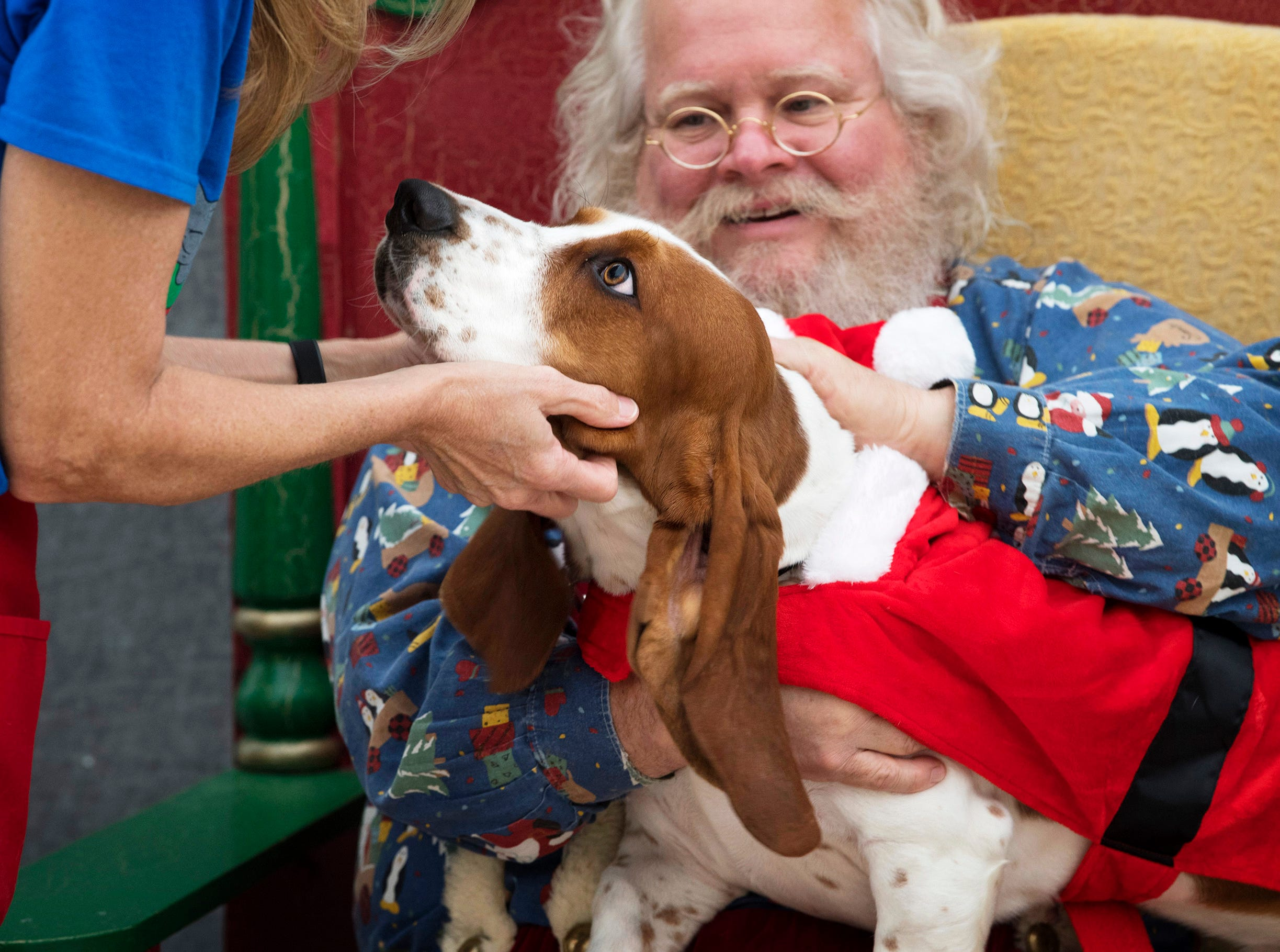 Beauford, a 1-year-old basset hound, prepares for his close-up with Santa Claus during the Vanderburgh Humane Society's Pet Pictures with Santa event at Washington Square Mall, Friday afternoon, Nov. 2, 2018.