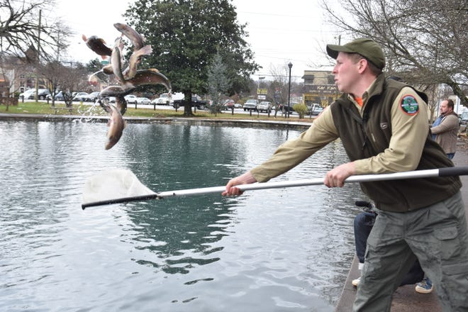 Hunter Simmons of the Tennessee Wildlife Resources Agency fills Fountain City Lake with rainbow trout on Friday, Dec. 14, 2018.