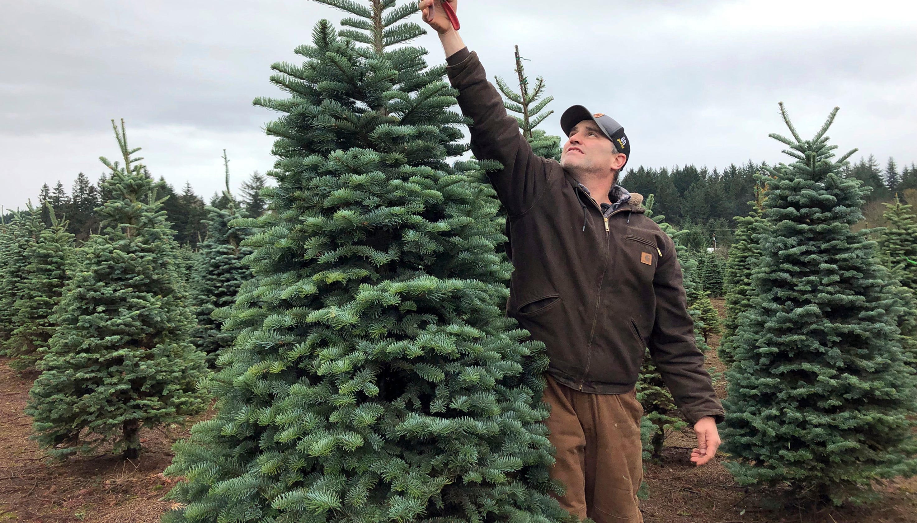 Christmas Tree Farm Asheville Nc.Are Real Or Fake Christmas Trees Better For The Environment