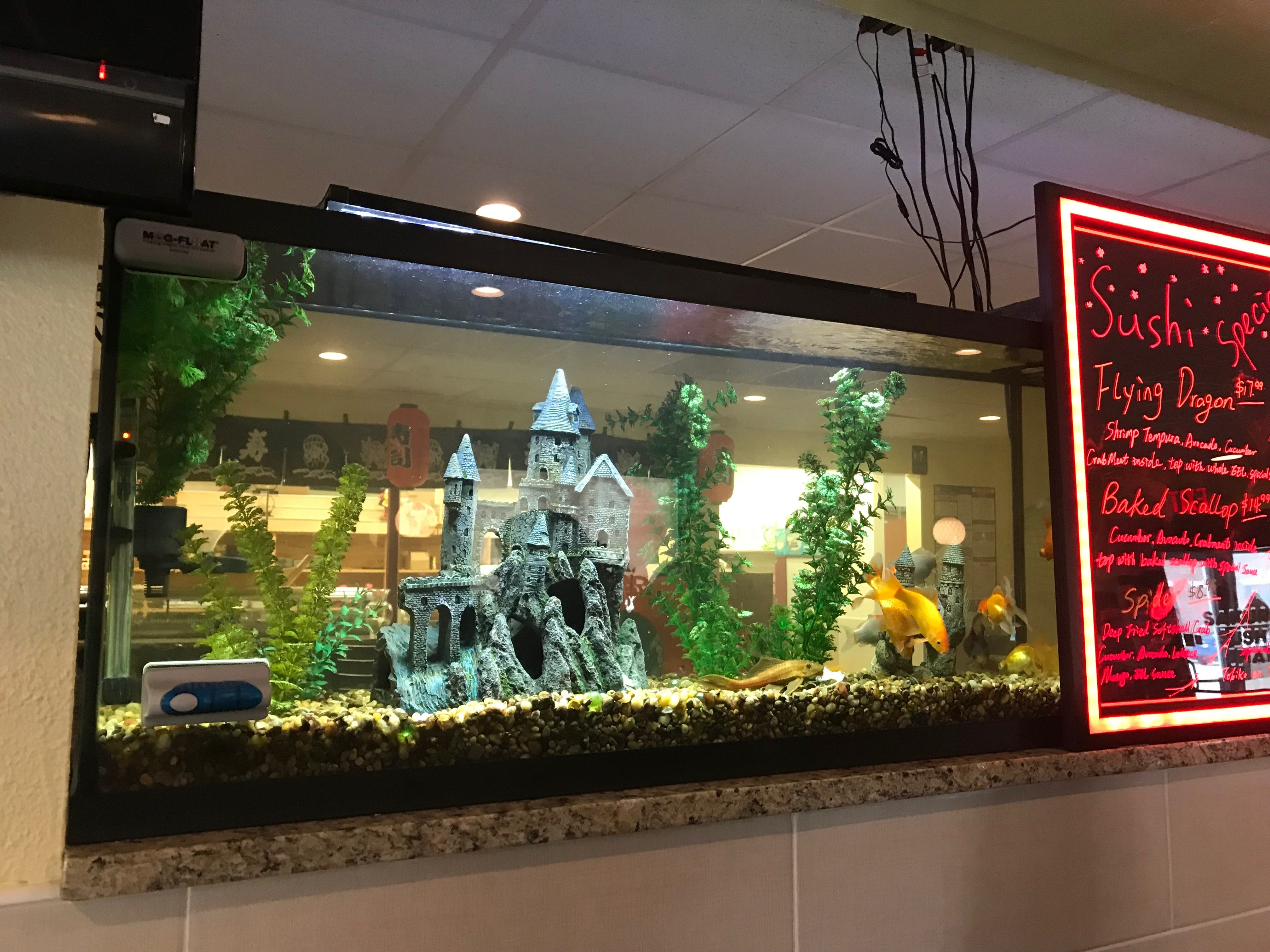 An interesting aquarium dominates the center wall at Sakura Sushi & Thai.