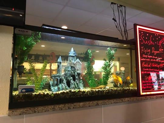 An interesting aquarium dominates the center wall at Sakura Sushi & Thai.