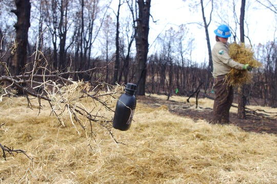 A tree branch serves as a canteen holder for California Conservation Corps crew members spreading straw near Carter Creek in west Redding.