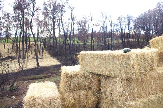 Straw, grass seed and fertilizer are placed in some areas to spur plant growth in some areas burned in the Carr Fire in west Redding.