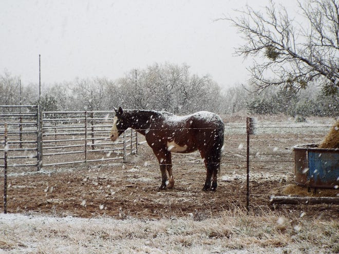 A horse blanketed by snow Thursday, Dec. 13, 2018, in Orient.
