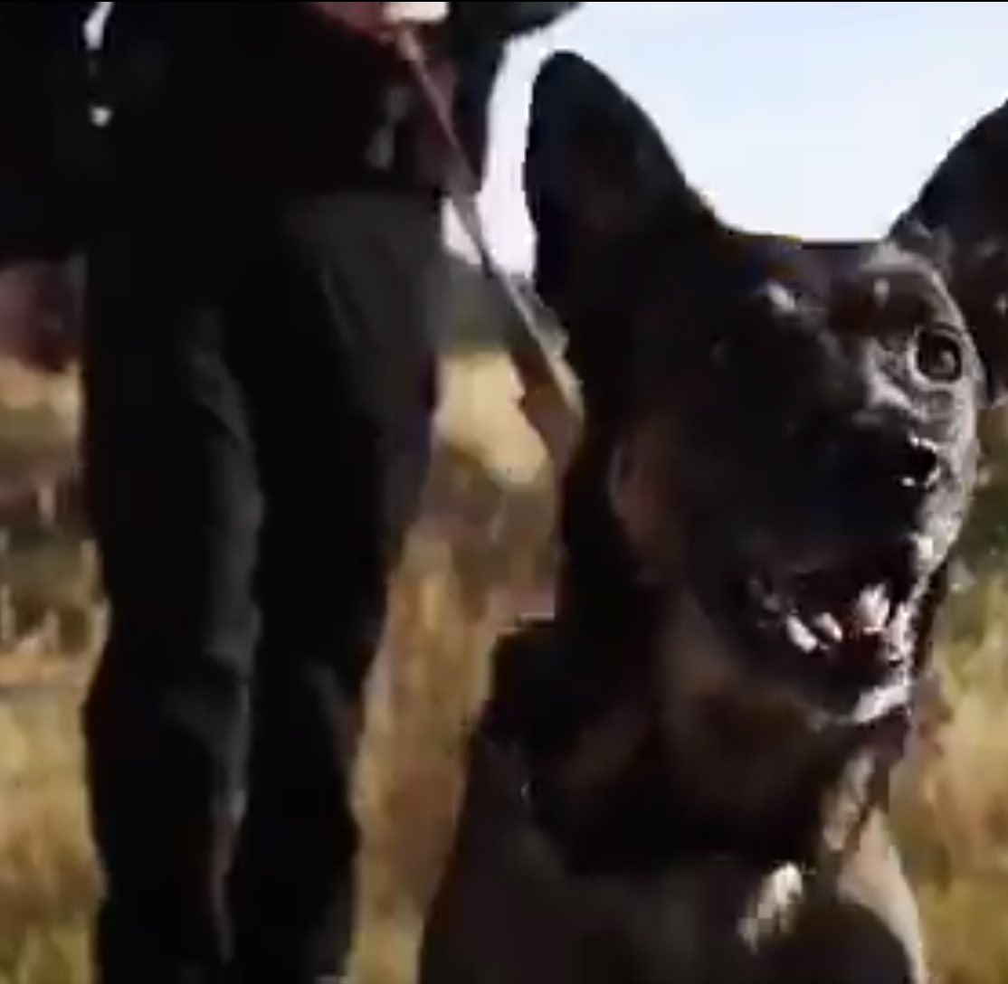 Watch: South Dakota Highway Patrol K-9s 'sing' for holiday commercial