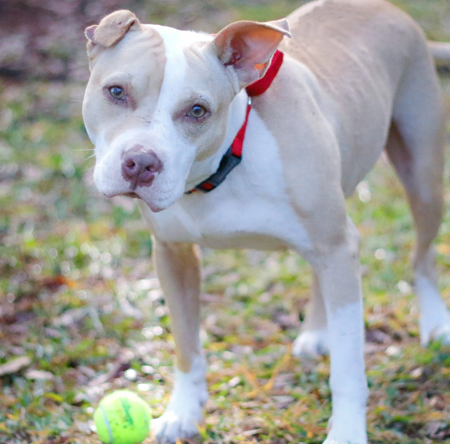 Adoptable pet: Meet Dex