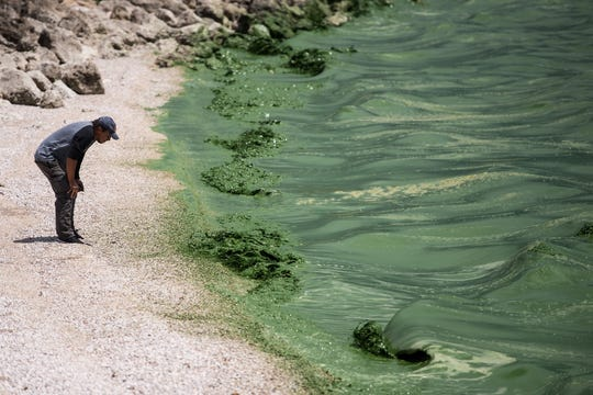 "Otto Herrera, of Royal Palm Beach, takes a closer look at the algae from shore at Lake Okeechobee on Friday, June 29, 2018, at Port Mayaca. Herrera, who said he has lived in Florida since he was 12 years old and had never seen the lake, was traveling from Bradenton with a friend who suggested the detour. ""I'm surprised about the green stuff,"" Herrera said. ""I was hoping to see a beautiful lake, but the green … it was kind of disappointing, you know."" Discharges from the lake to the St. Lucie River were starting to be reduced Friday, with a complete stop for nine consecutive days then resuming in pulses indefinitely, according to the Army Corps of Engineers."