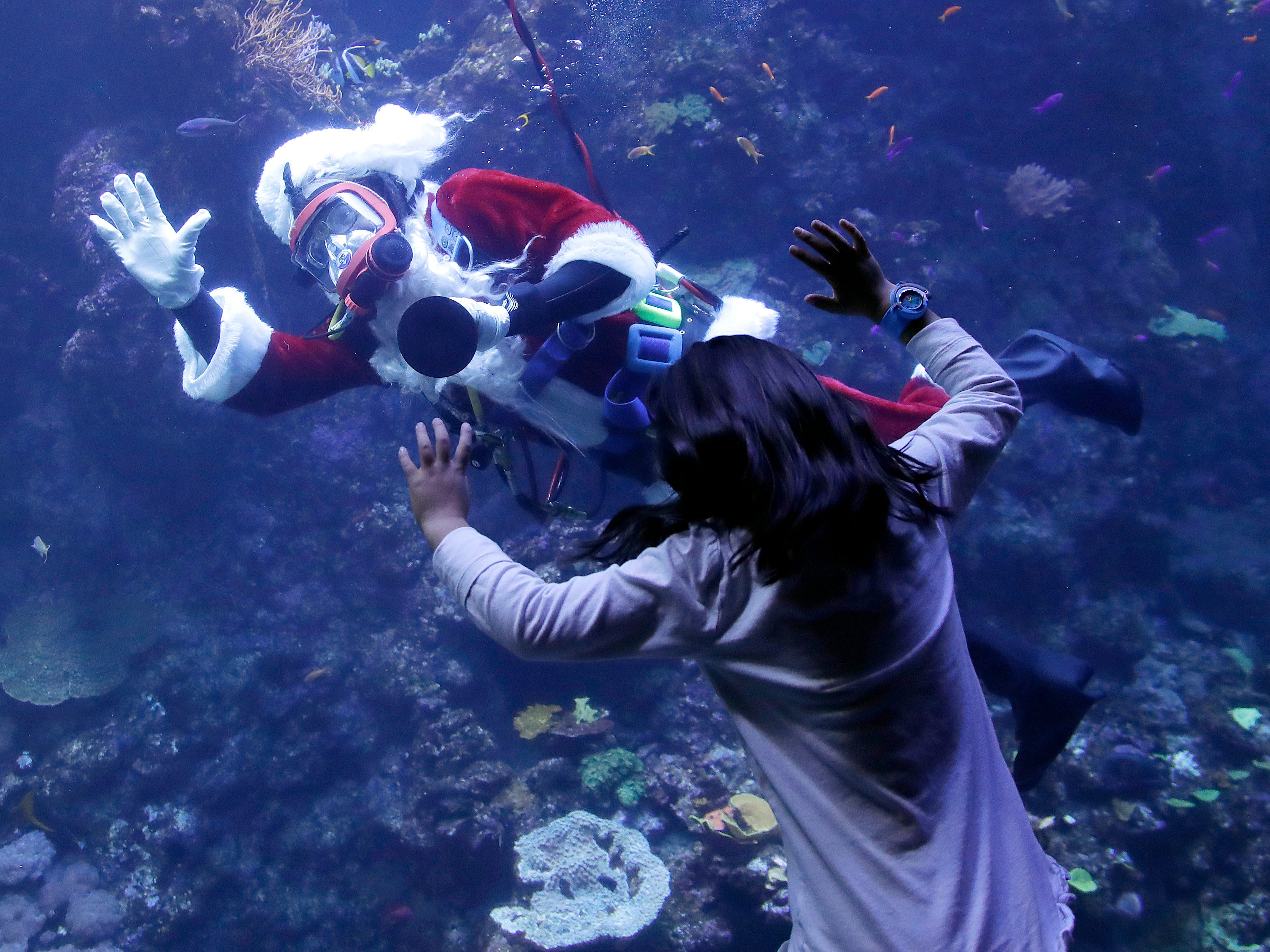 Volunteer diver George Bell, dressed as Santa Claus, waves to visitors to the Philippine Coral Reef tank at The California Academy of Sciences in San Francisco on Dec. 13, 2018.