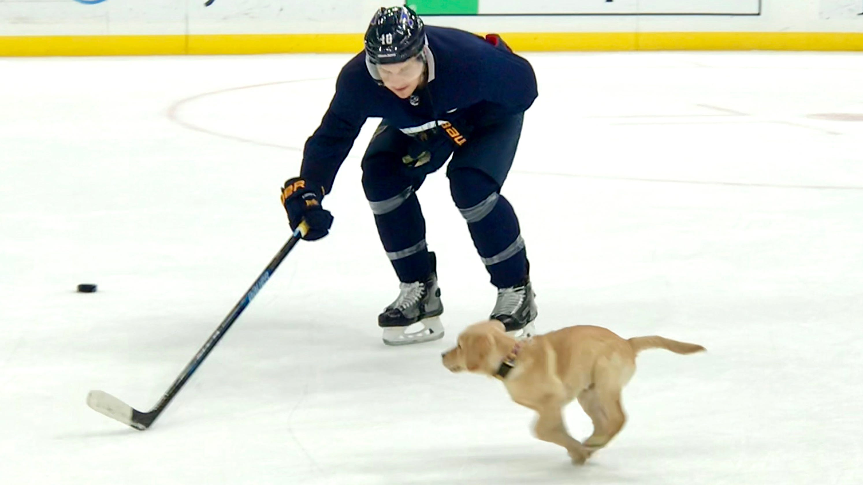 54df1d52326 St. Louis Blues  adopted puppy a hit during Thursday s practice