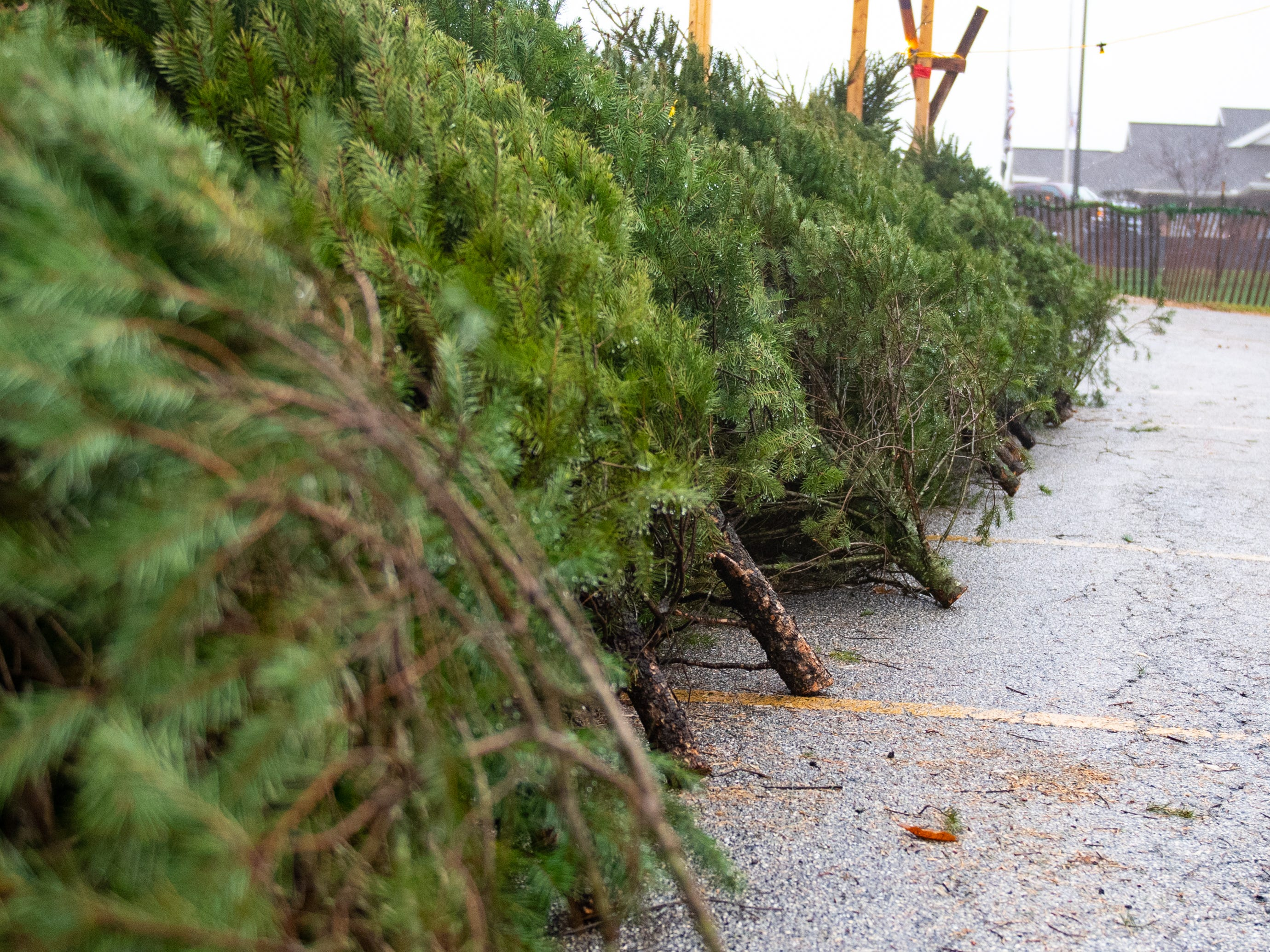 Trees at the annual Christmas Tree Sale are leaned up against wooden separators, so customers can grab which ever one they desire, Saturday, December 15, 2018.