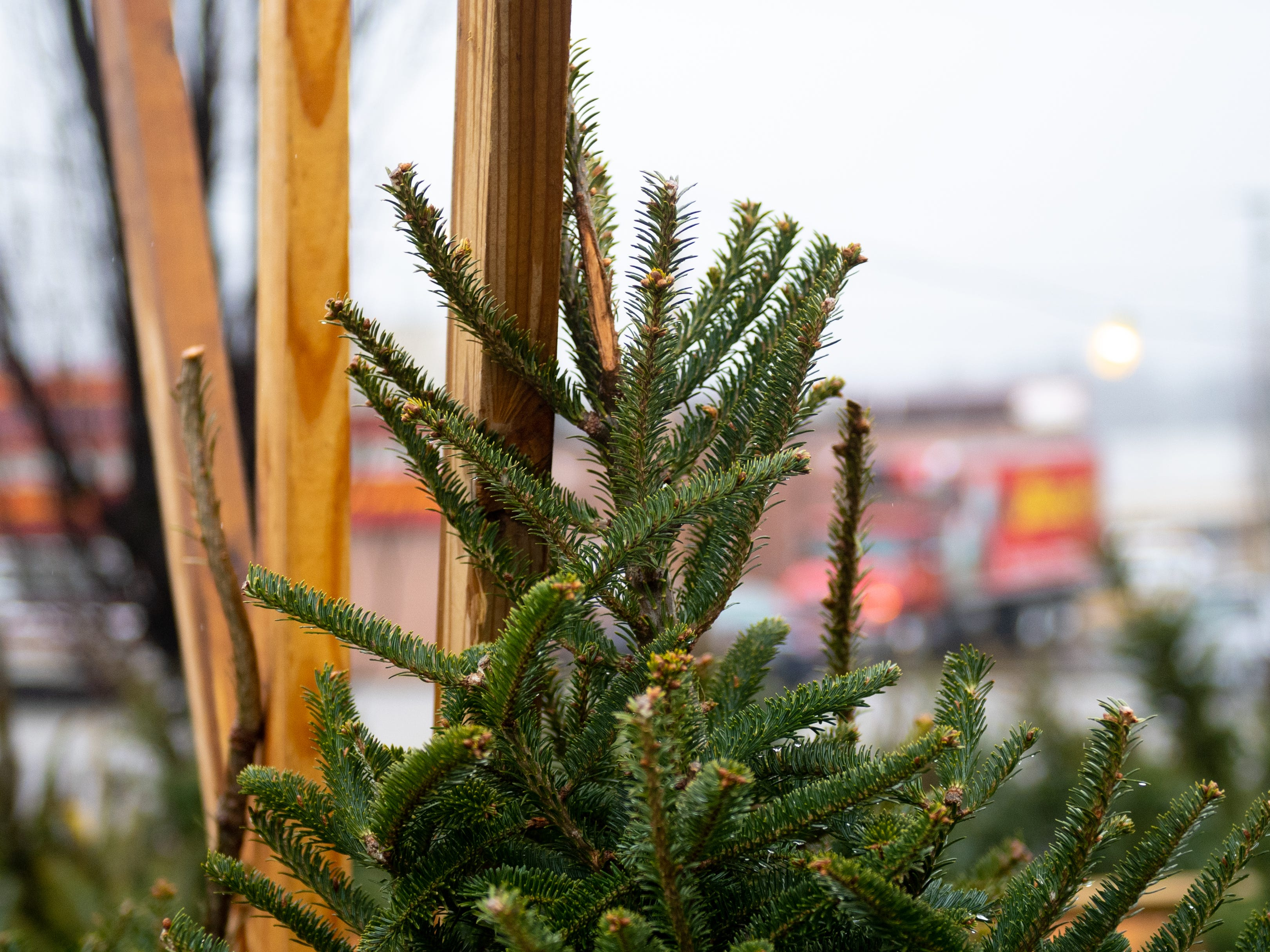 According to Glenn Olsen, the trees in the lot are fresher than ever due to the constant rain York's been getting, Saturday, December 15, 2018.