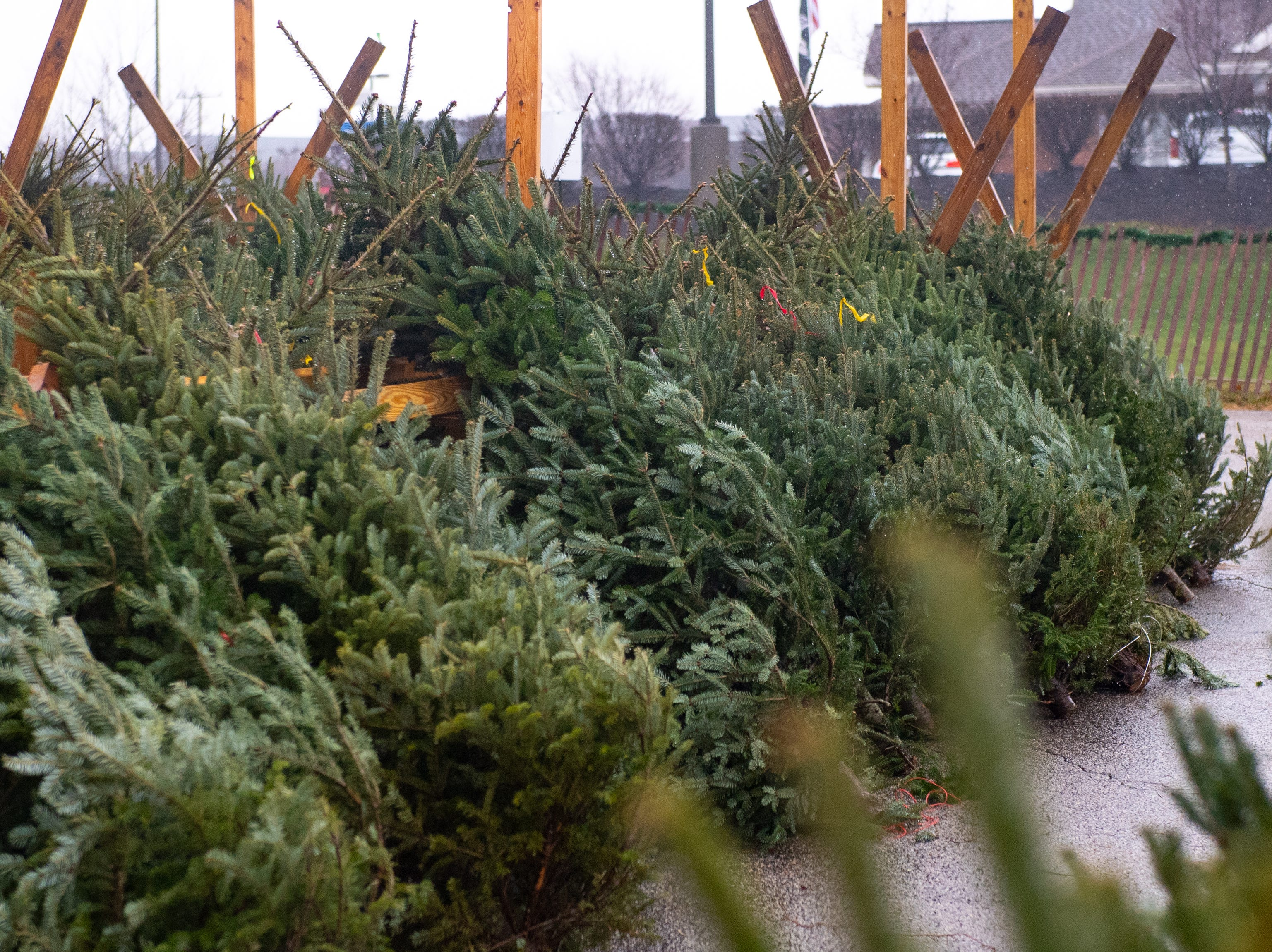 The annual Christmas Tree Sale in the parking lot of Ollie's Bargain Outlet has been open since Black Friday and will go until Christmas Eve.