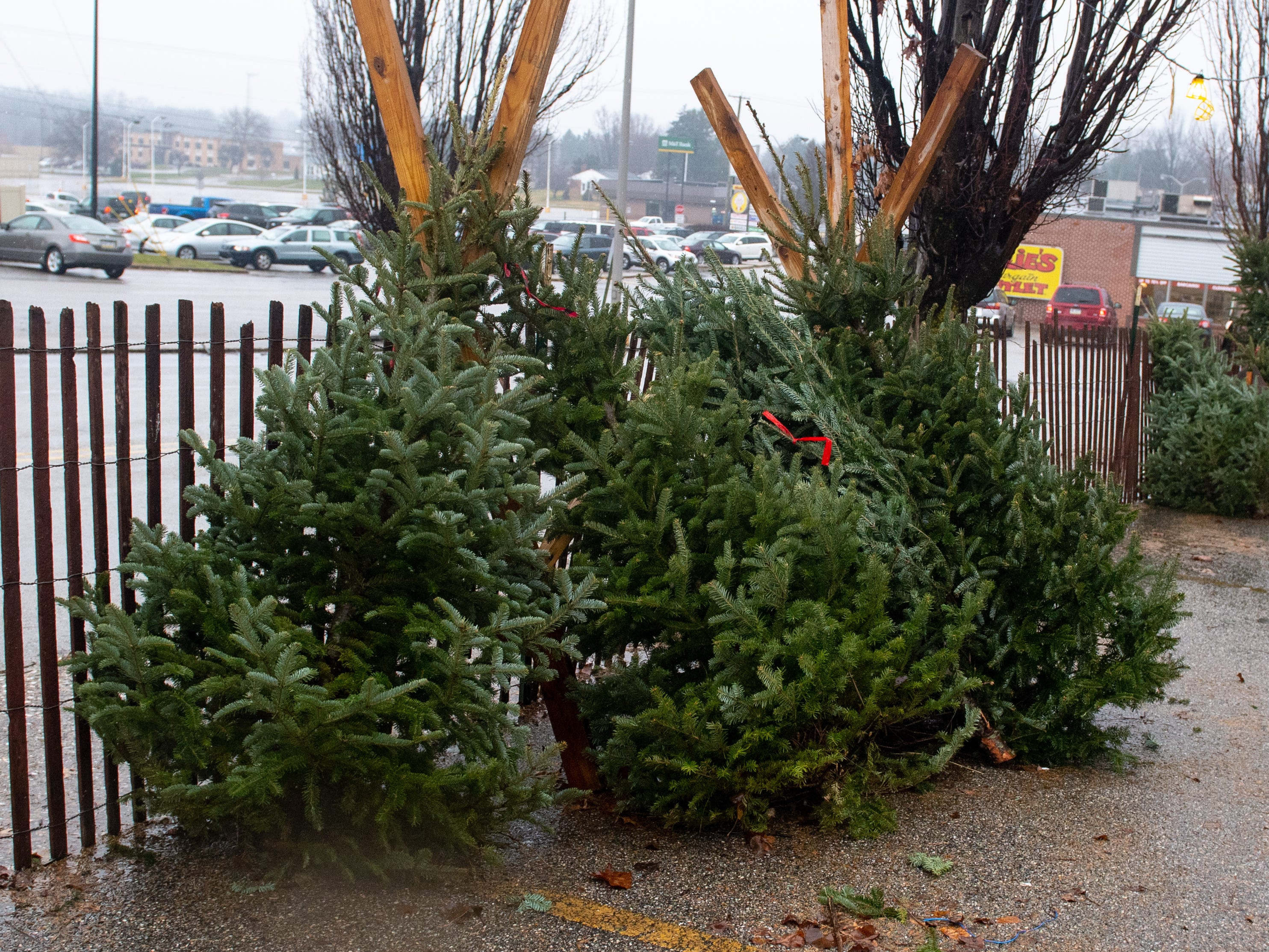 Trees cost anywhere from $20 to $70 depending on the size and all of the proceeds go to the Central Pennsylvania Food Bank, Saturday, December 15, 2018.