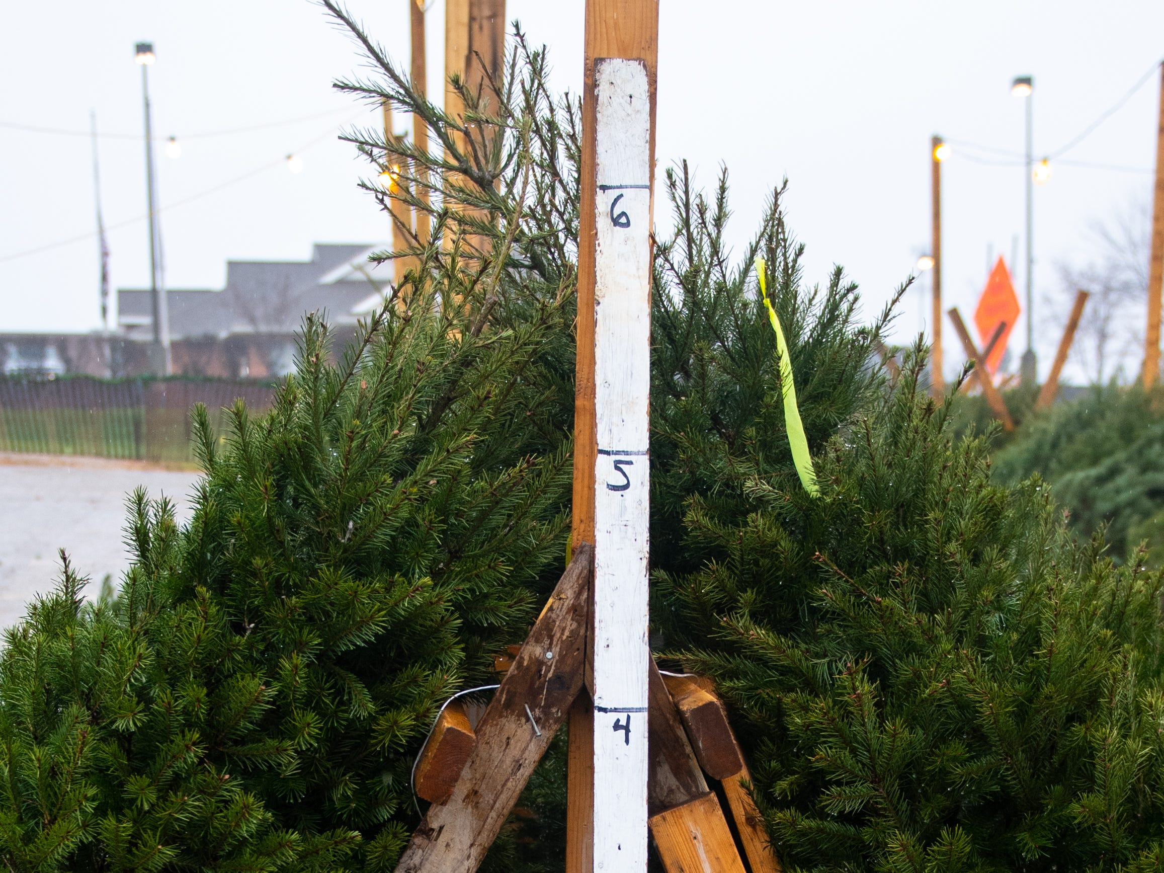 The annual Christmas Tree Sale is not limited to Ollie's Bargain Outlet parking lot. There's another location in the parking lot of Weis Markets in Red Lion, December 15, 2018.