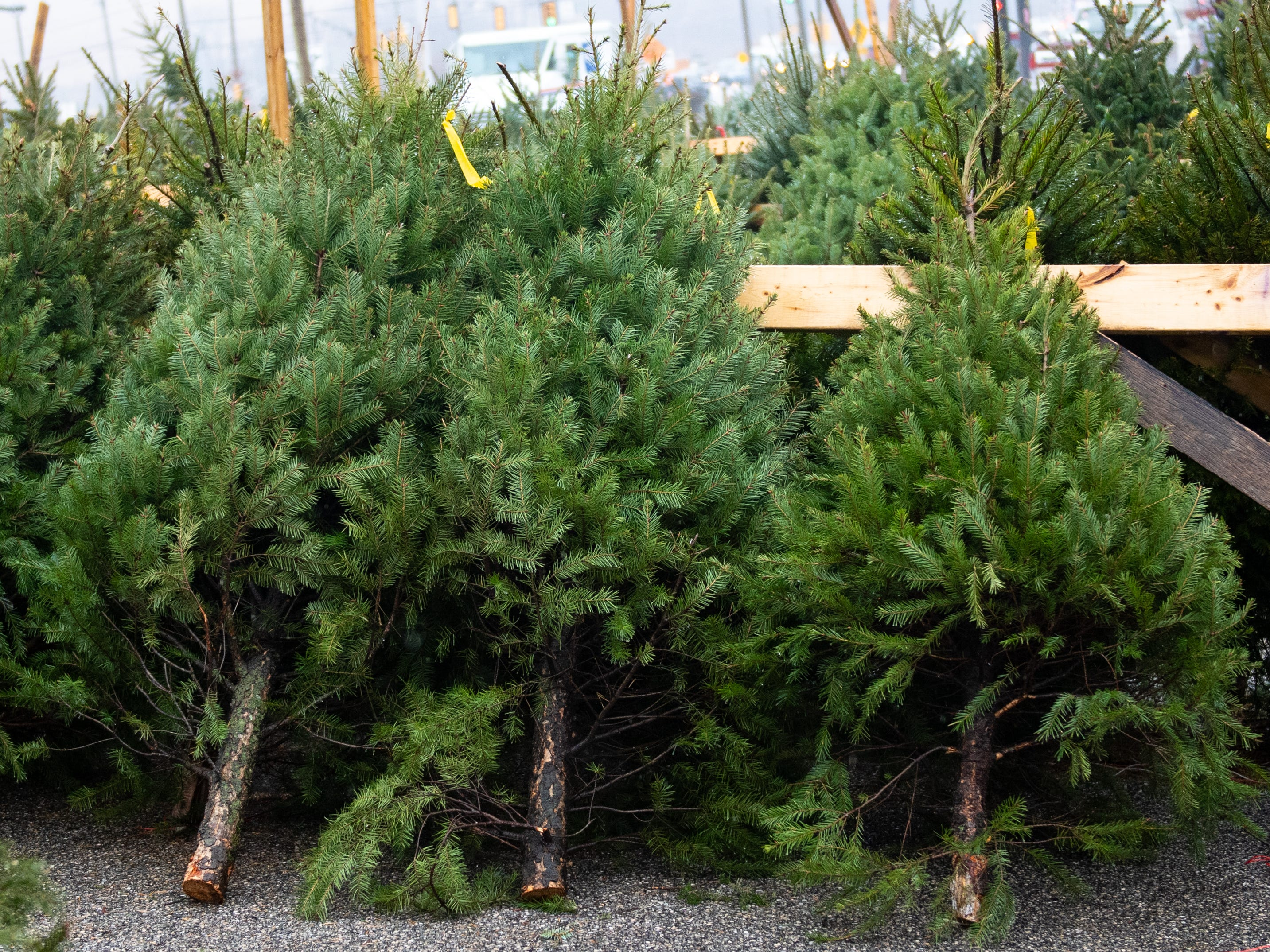 The annual Christmas Tree Sale also takes food donations for the Central Pennsylvania Food Bank, Saturday, December 15, 2018.