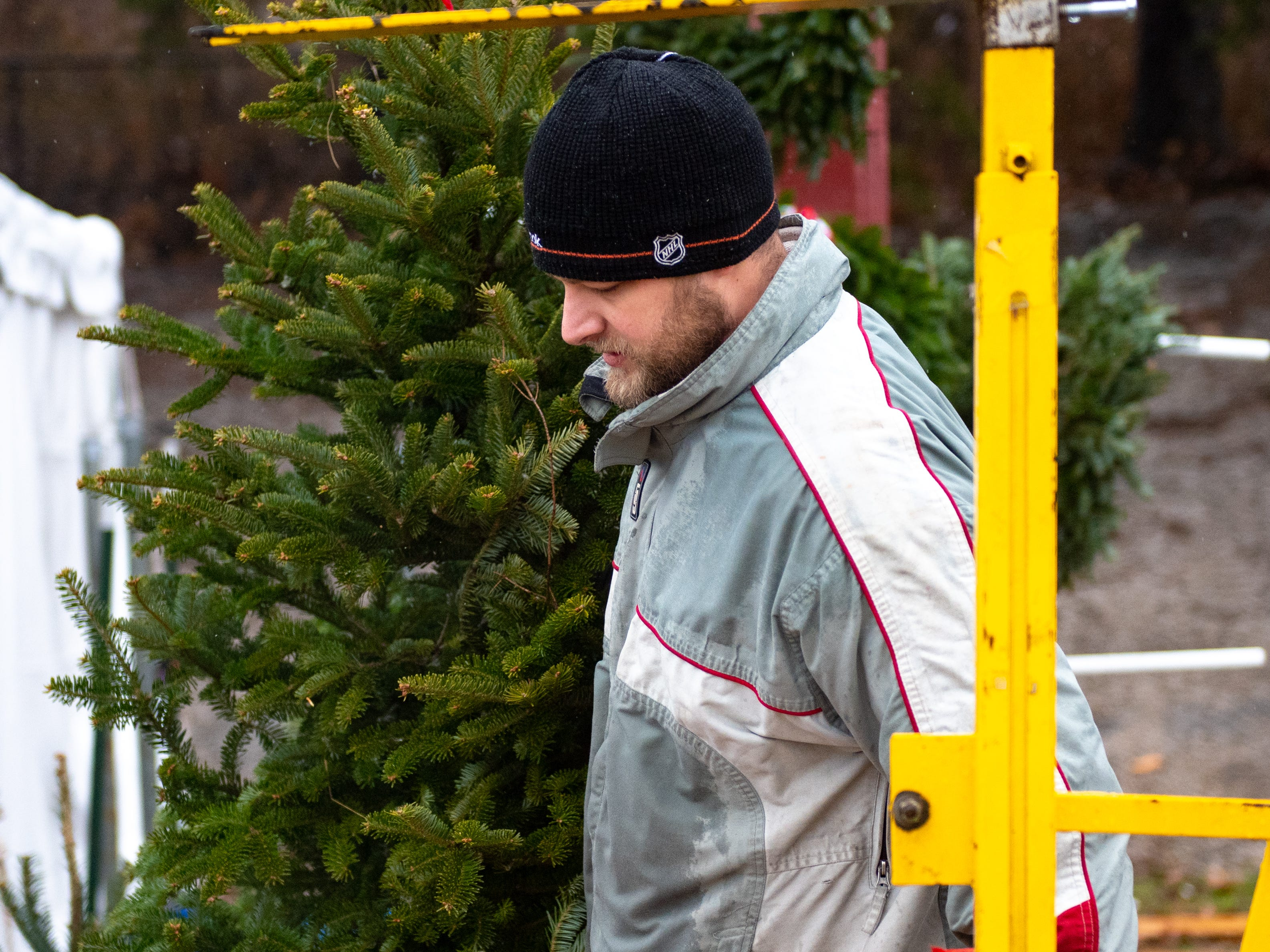 After a hole has been drilled at the bottom of a tree, volunteer Cody Miller prepares to wrap it up, Saturday, December 15, 2018.