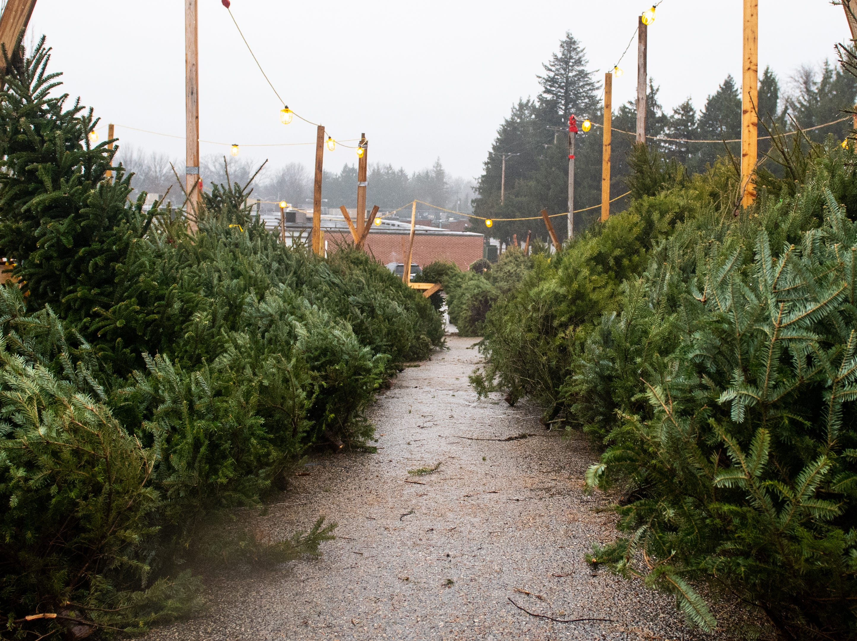Hundreds of fresh locally grown trees are on sale in the lot, ranging from 4 to 14 feet, Saturday, December 15, 2018.