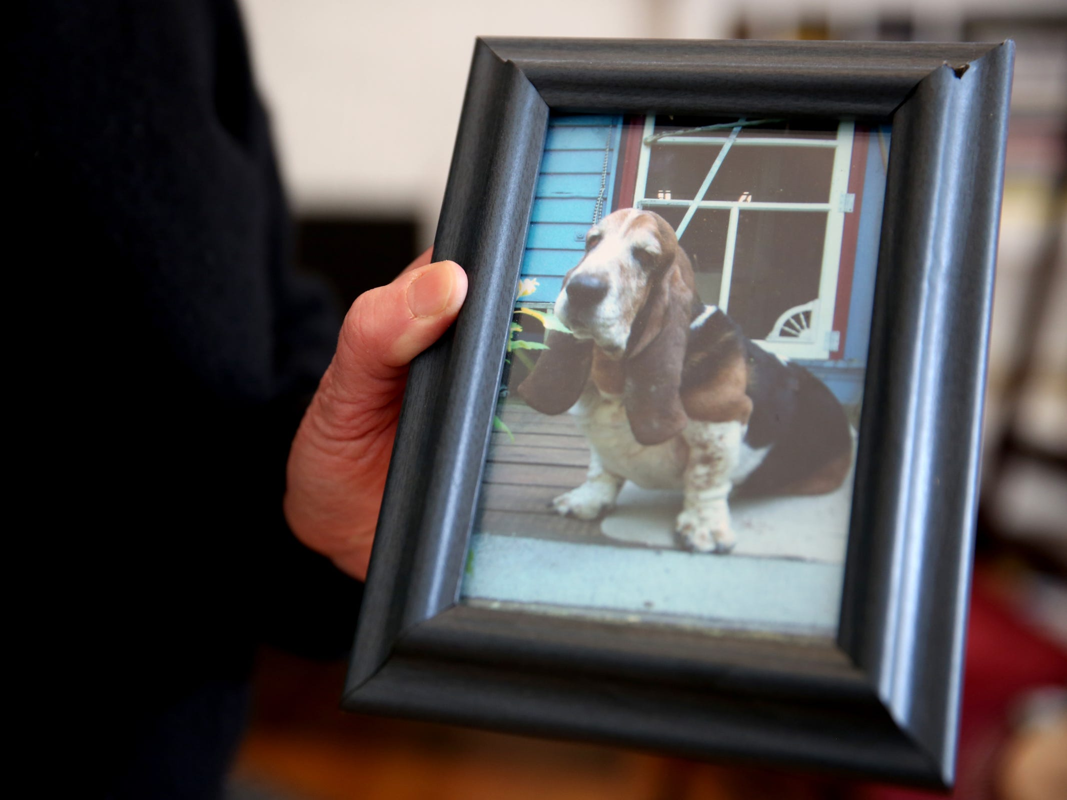 Jean Brougher holds a photo of her basset hound, Clifford, who died several years ago. She will travel and volunteer at an animal shelter near Paradise, California following wildfires. Photographed at Brougher's home in Salem on Friday, Dec. 14, 2018.