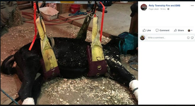 Reily Township Fire and EMS shared on Facebook this picture of a horse firefighter helped to its feet.