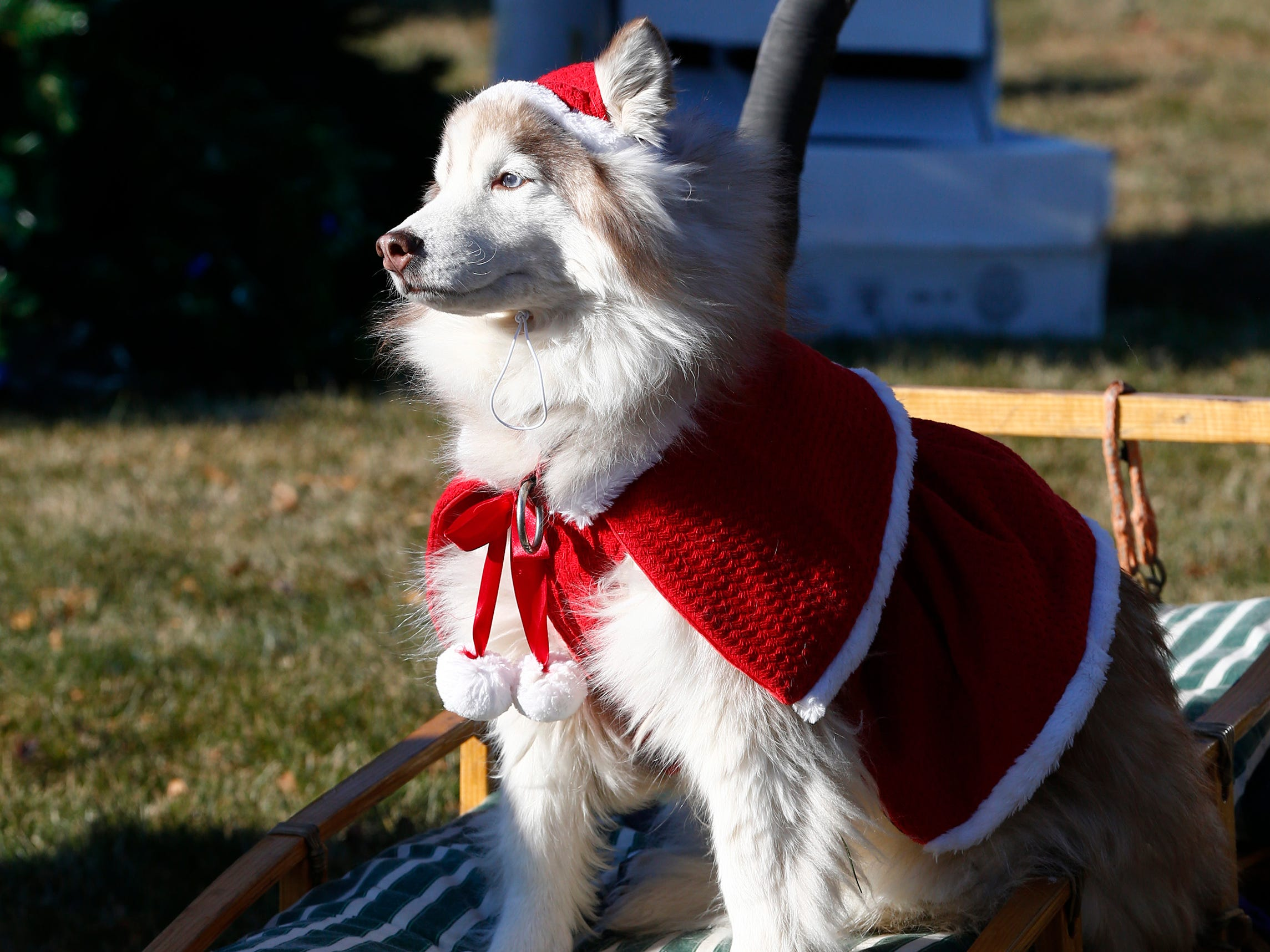A member of the Door County Sled Team waits for the next group for a photo at the Kids2Kids Christmas celebration at Kapco Metal Stamping in Grafton on Dec. 15 that concluded a month-long toy drive that collected more than 22,000 toys to be distributed to children in Ozaukee and Milwaukee counties.
