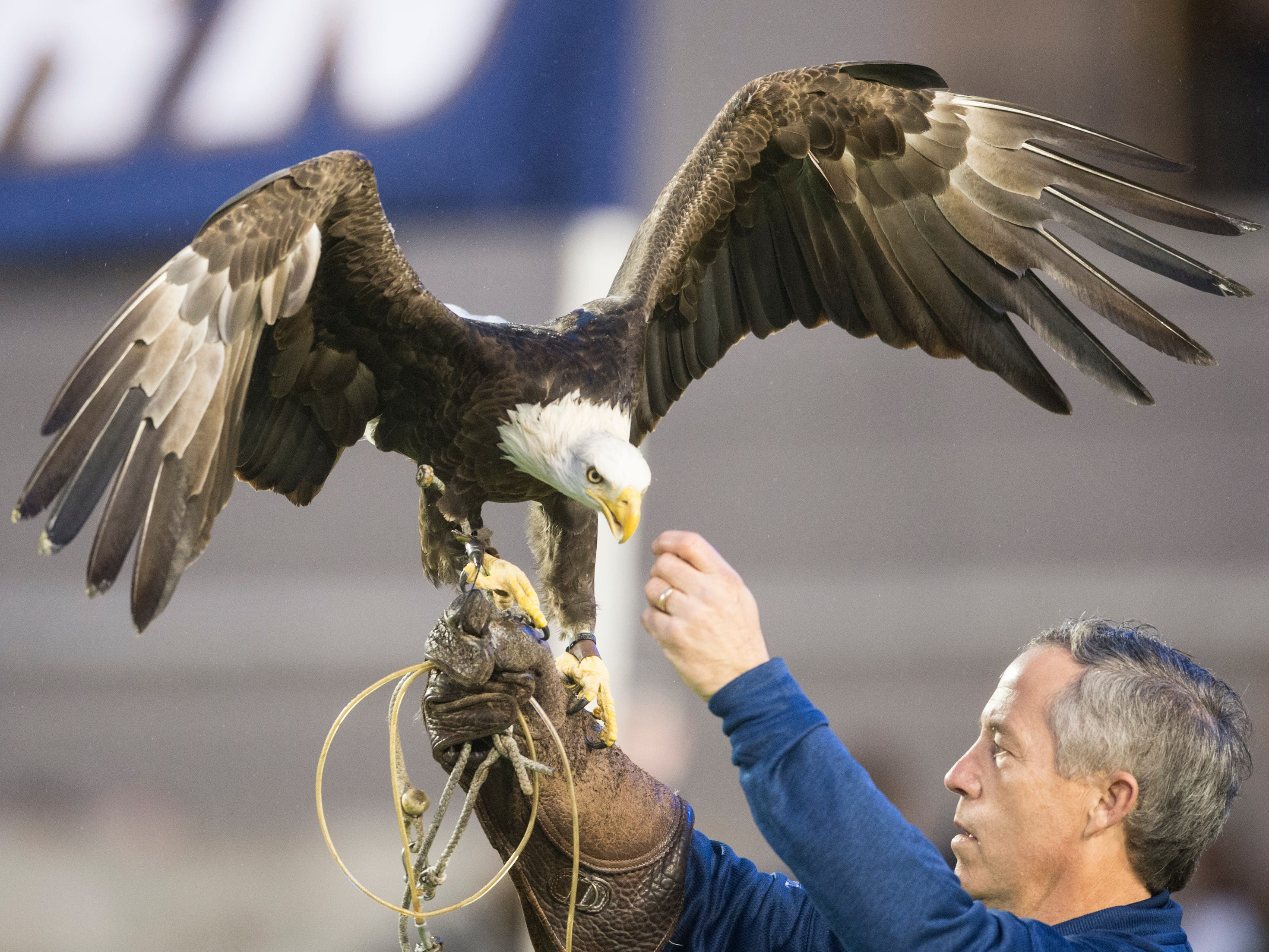 Georgia Southern's mascot, Freedom the bald eagle, walks out with his team before the Camellia Bowl at Cramton Bowl in Montgomery, Ala., on Saturday, Dec. 15, 2018. Georgia Southern leads Eastern Michigan 17-7 at halftime.