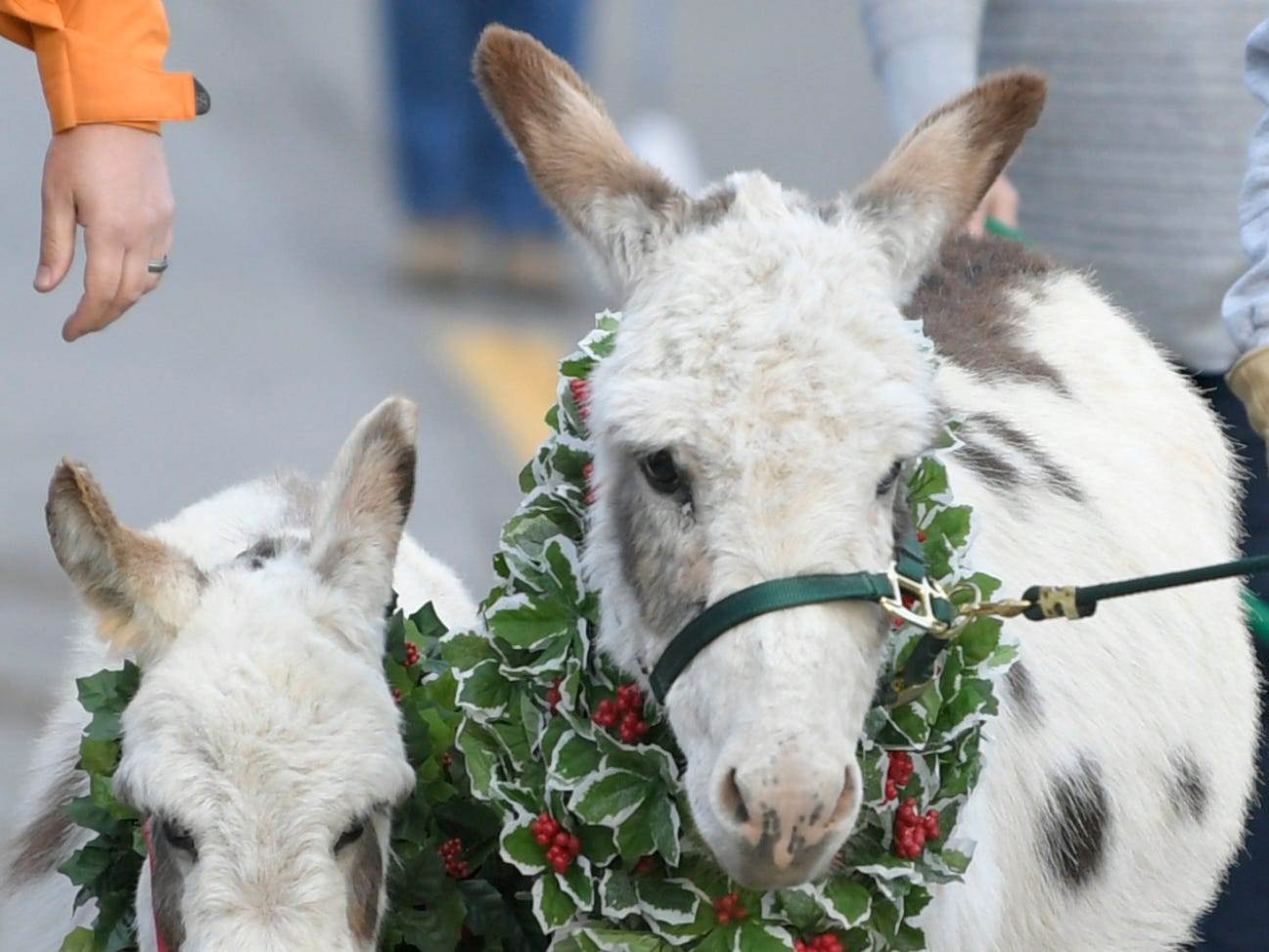 Donkeys were part of the Leiper's Fork Christmas Parade on Saturday, Dec. 15, 2018.