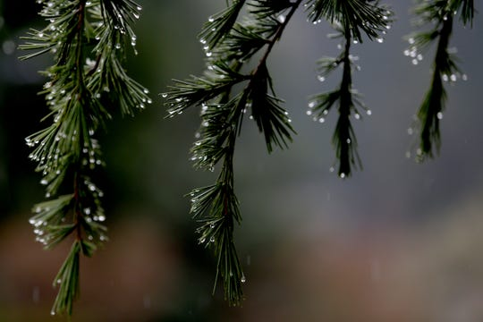 Rain drops cling to a branch in Salem on Sunday, Dec. 16, 2018.