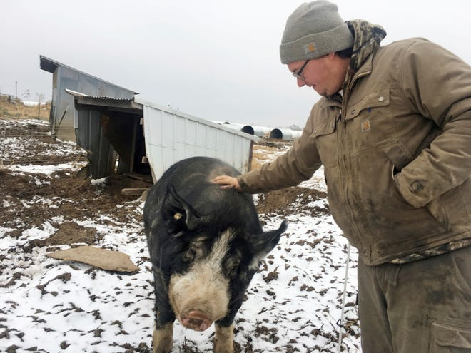 Mike Dolan reaches over an electric fence to greet his 3-year-old boar at his Seven Seeds Farm along Highway Z between Dodgeville and Spring Green. Dolan, 25, is the seventh generation to farm his family's farm, which was established in 1872 and is now certified organic.