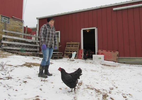 Lea Dolan-Stroncek, president of Driftless Defenders, one of several organized opposition groups to a proposed high-powered transmission line, also raises organic chickens on Seven Seeds Farm. One of the two proposed routes for the line and towers would run right past her farm.