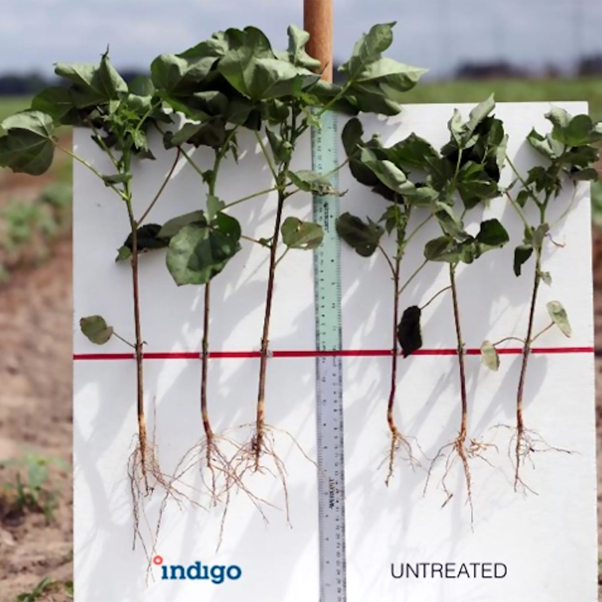 With technology and transparency, Indigo Ag seeks to disrupt the agriculture industry