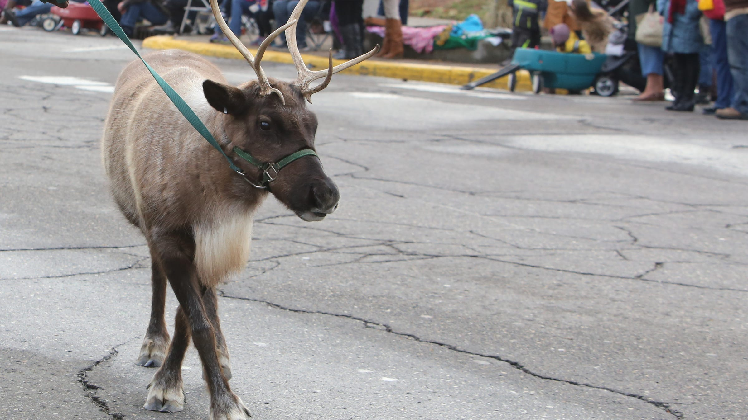 Clarice, a reindeer from Rooftop Landing, in...