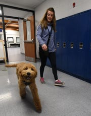 Granville Middle School therapy dog George and school counselor Misti Postle walk the halls of the school and do a bit of obedience training. The young poodle eases stress for Granville Middle School students.