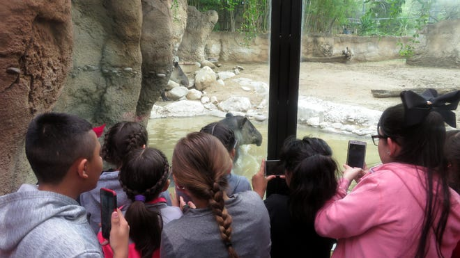 """Fifth-grade students at Bataan Elementary School sold chocolate candy bars to payfor a field trip to Tucson, Arizona. Teachers Doris Lancaster, Gina Simms, Melissa Noriegaand Kim Perea, along with 15 other chaperonesand 90 students enjoyed a trip to Reid Park Zoo and the Desert Museum.The students had read the chapter book, """"Night of the Spadefoot Toads"""" in class.The main characteris a fifth-grade student from Tucsonand he referred to the Desert Museum several timesthroughout the book.The fifth-grade teachers decided that it would be an awesomeopportunity for the students to experience both the zoo and museum. The students were treated to Golden Corral before returning home."""