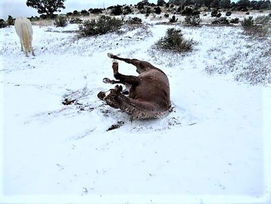 Spanky In Snow