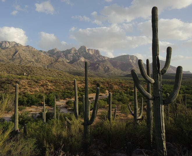 Catalina State Park spreads across the foothills of the craggy Santa Catalina Mountains, north of town, offering hiking, biking, camping and birding.