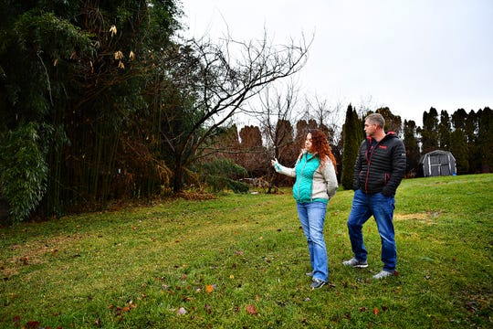 Tami and Tom Gesner stand near their property line, as they talk about their neighbor's overgrown bamboo and and the environmental problems it has caused for their home and neighborhood in Fairview Township, Sunday, Dec. 16, 2018. Dawn J. Sagert photo