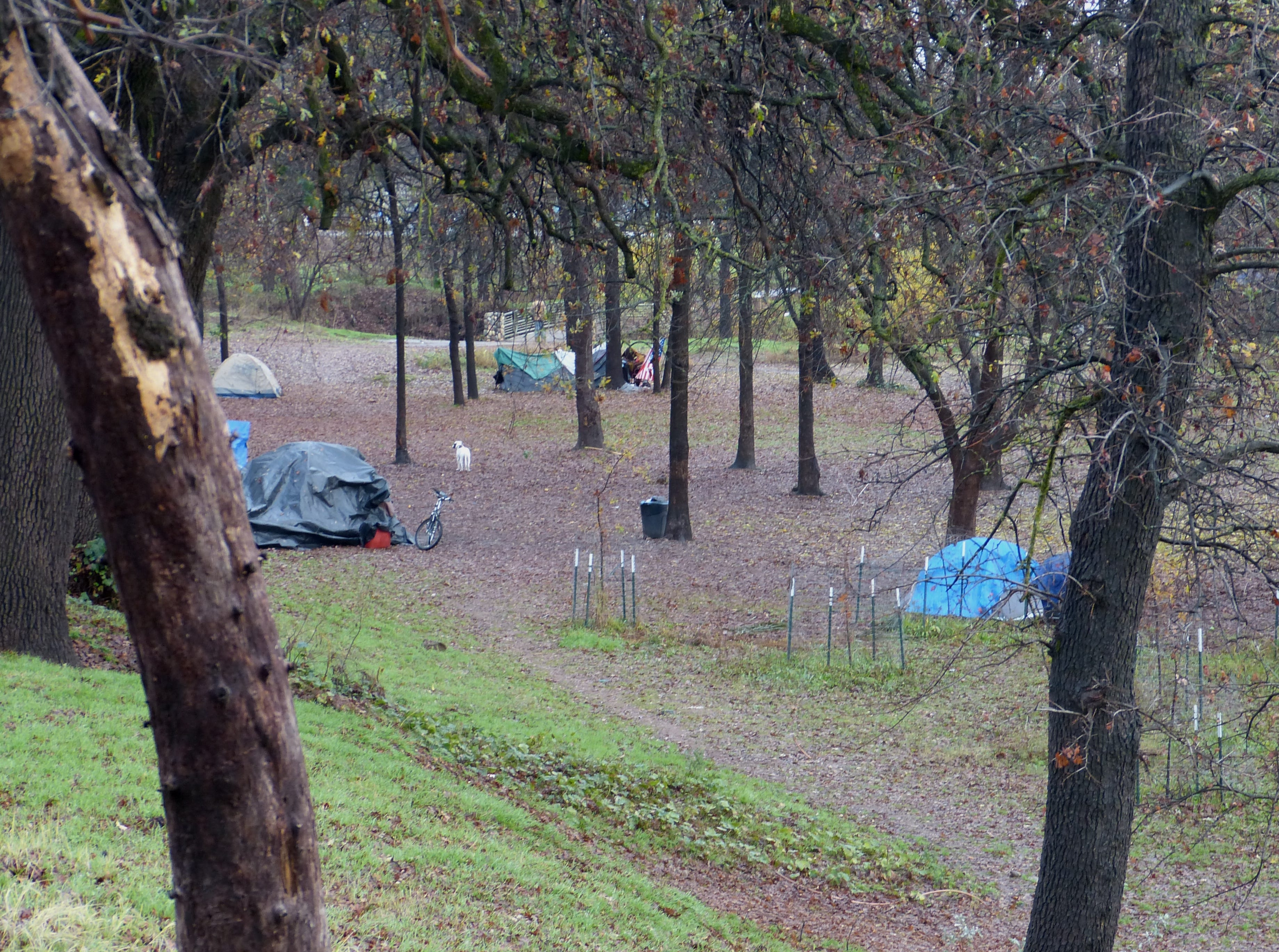 """A small """"tent city"""" has cropped up at the Parkview Riverfront Park in Redding."""