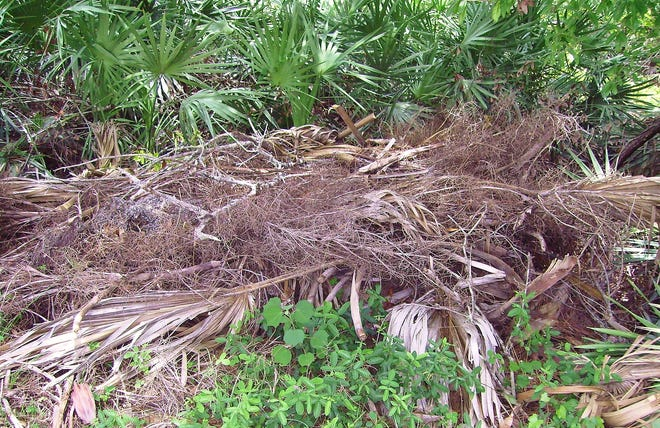 Be kind and make your green space a generous garden, a place for wildlife, and plants in the right place. A brush pile tucked discreetly at the back of the garden is home and haven for a multitude of beneficial critters.