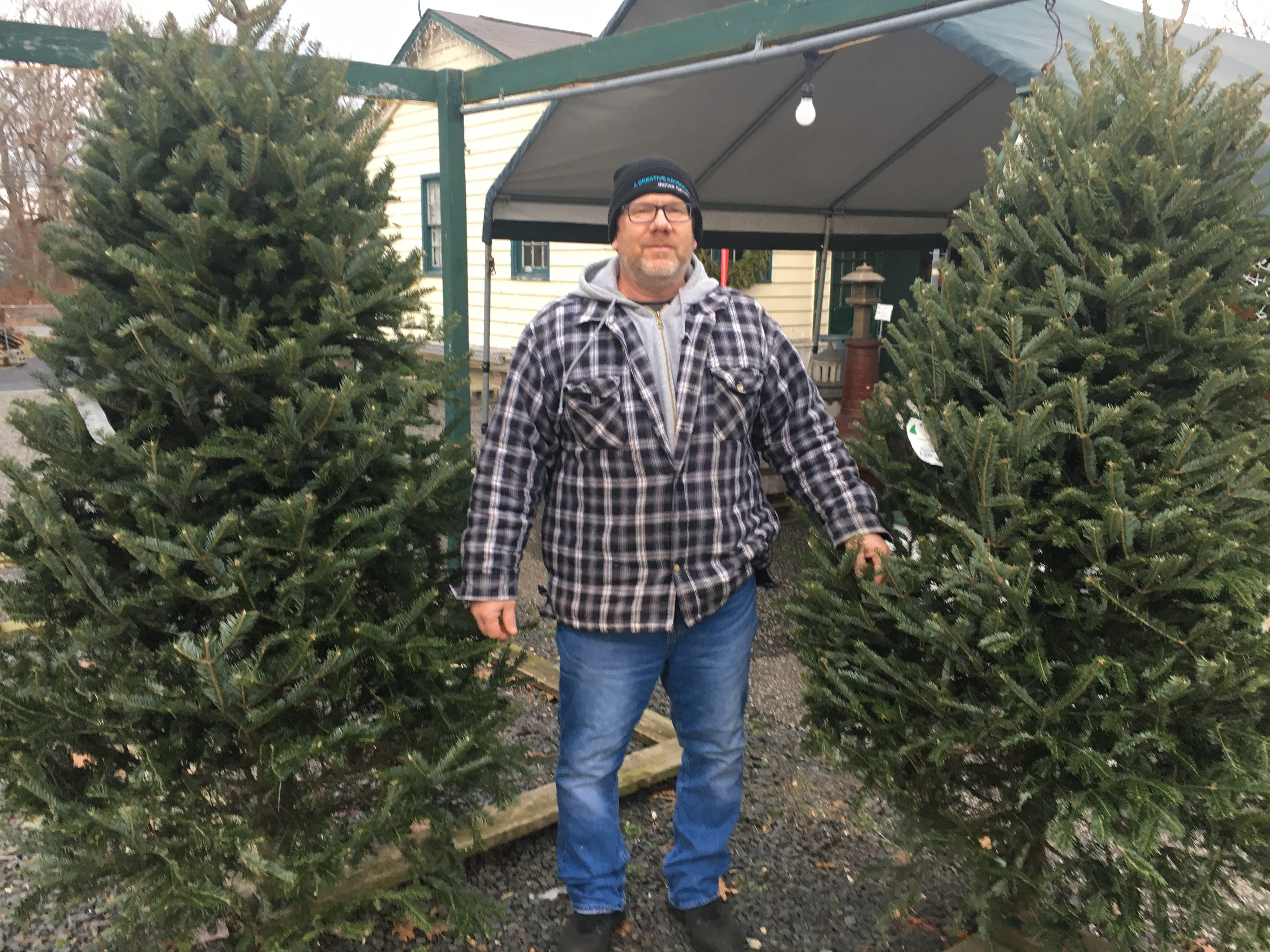 Christmas Tree Shortage.Running Out Of Christmas Trees