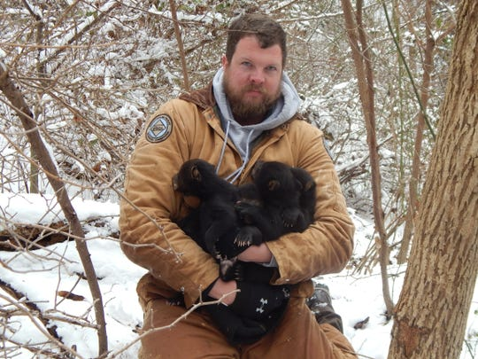 Justin McVey, mountain region wildlife biologist, with the N.C. Wildlife Resources Commission, holds bear cubs during the Asheville Urban/Suburban Bear Study, said black bears were more active than usual this past year.
