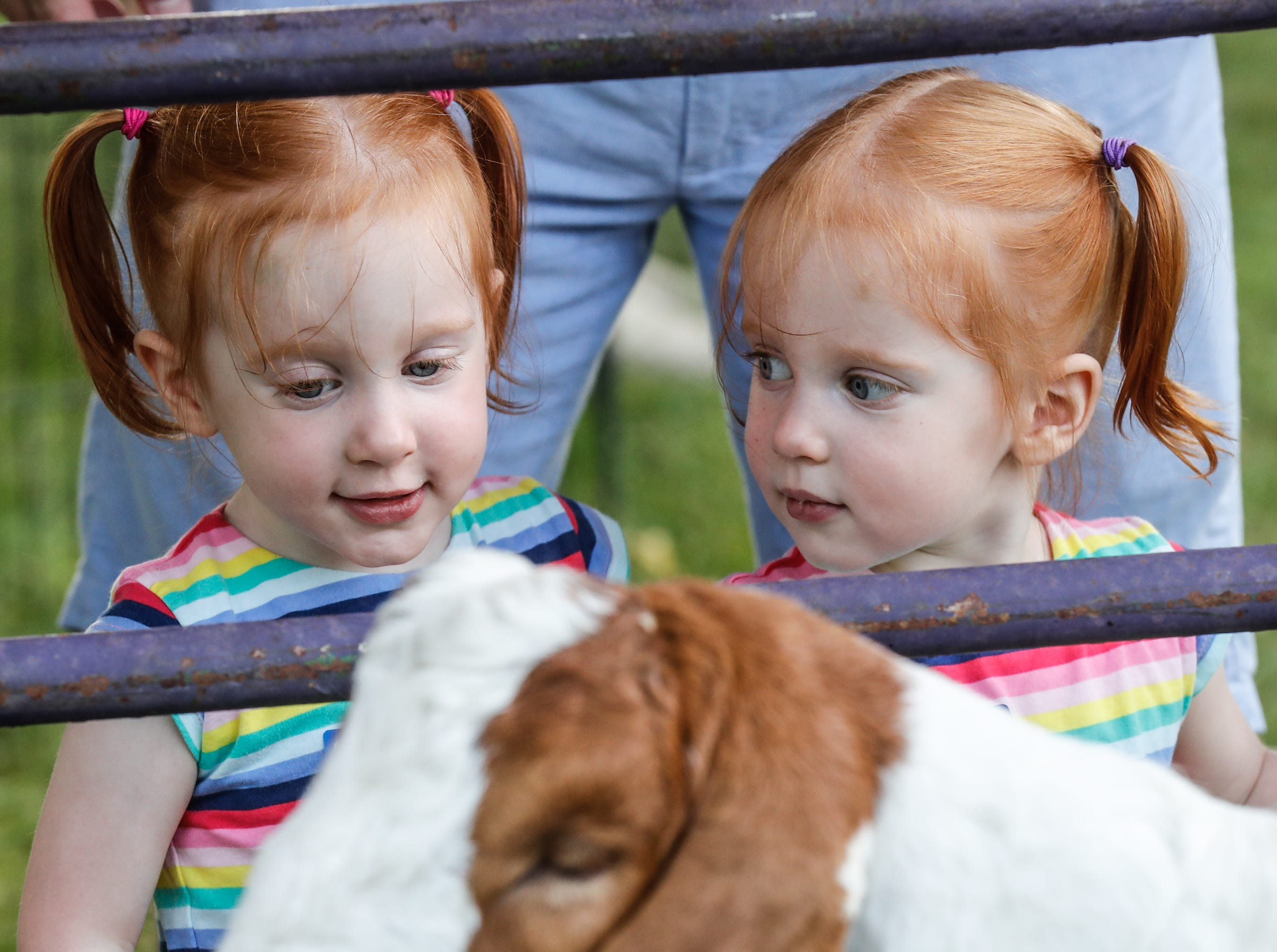 Cecelia, left, and Madeline Malik meet a goat in the petting zoo during the annual St. Vincent and Peyton Manning ChildrenÕs Hospital NICU Reunion at Lions Park in Zionsville Ind. on Sat. Aug. 18, 2018.