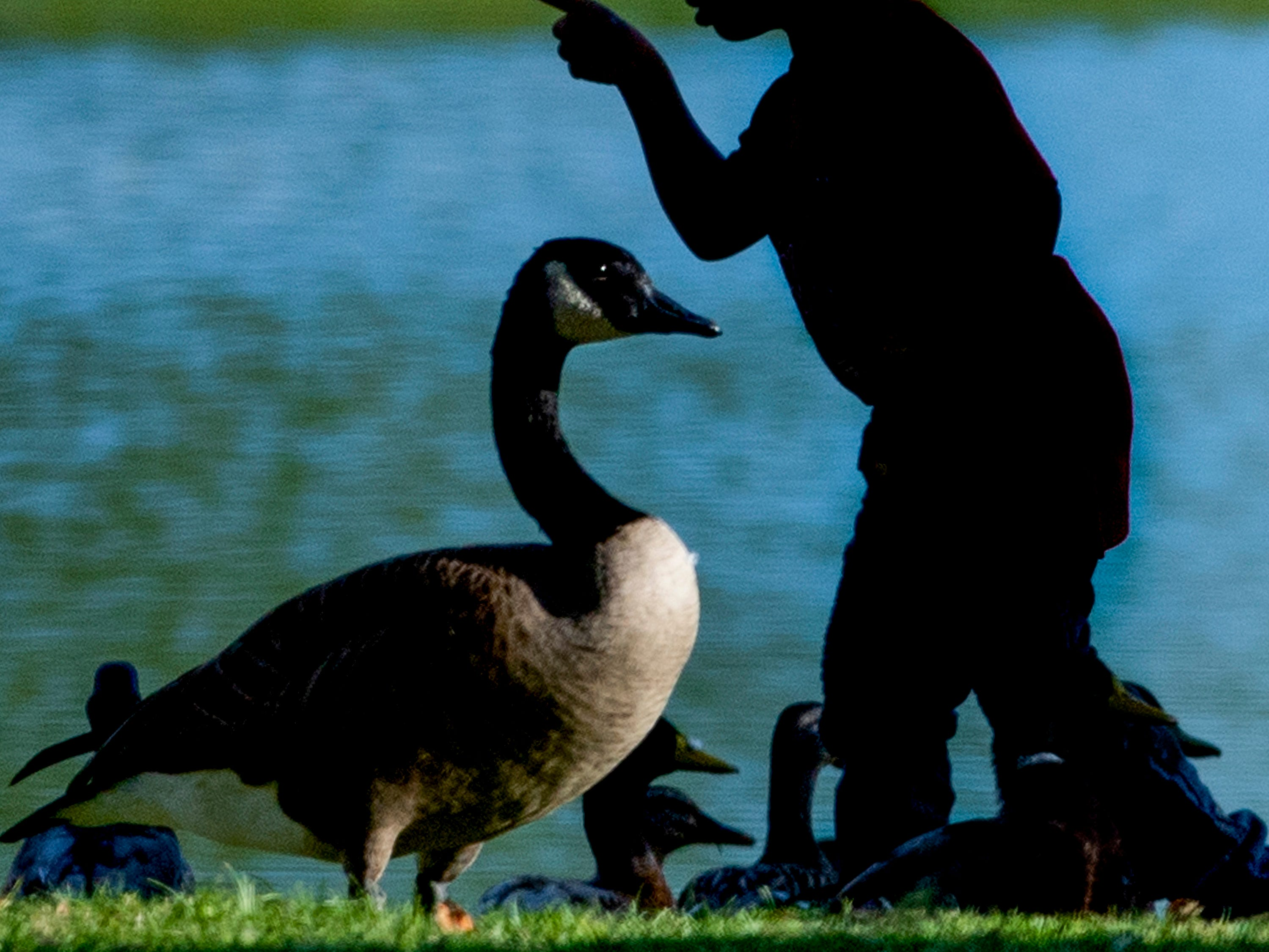 A child plays as he feeds ducks and geese at Blount Cultural Park in Montgomery on Tuesday October 2, 2018.