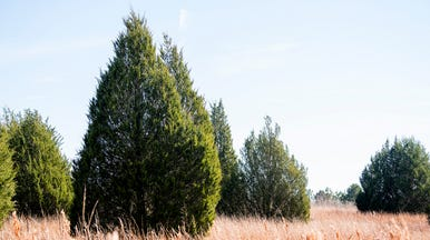 Reynolds Family Donates Christmas Tree To City Hoping Share The Joys Of Their Farm With O