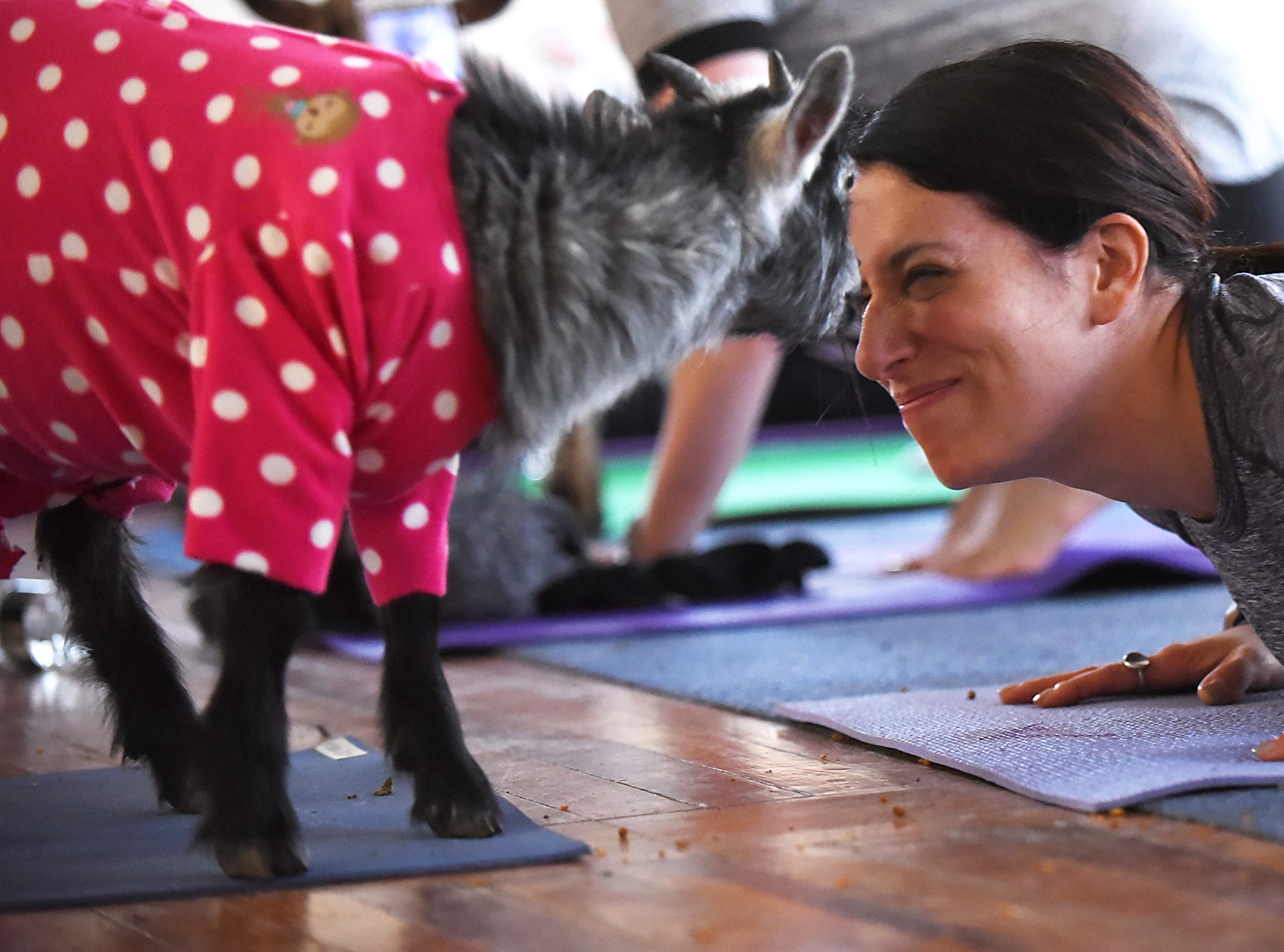 Totes Goats yoga class at the New Weis Center in Ringwood, NJ on Saturday April 07, 2018. Maria Palmer gets a visit from Mica during cobra pose.
