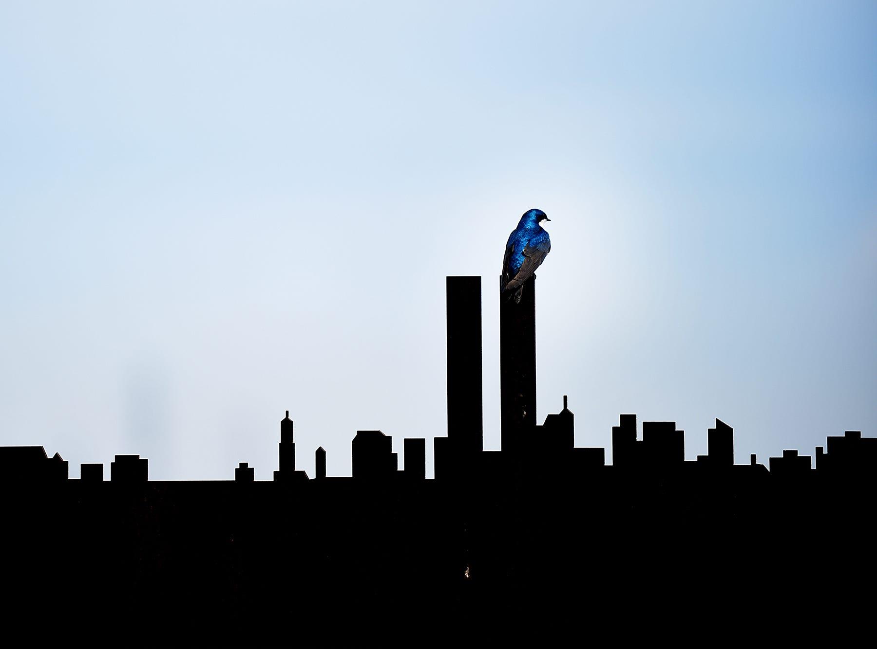 A bird sits atop a sculpture of the New York City skyline at Richard W. DeKorte Park in Lyndhurst, NJ on Thursday May 17, 2018.