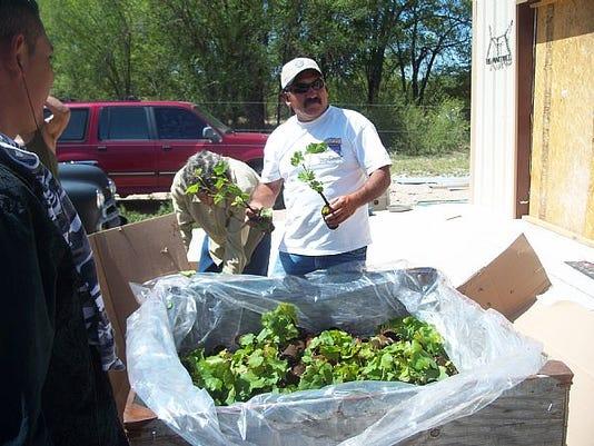Robert Naranjo And Growers Unpacking Vines