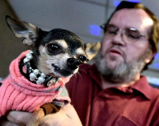 Medical service dog Snickers and her owner, Wally Miller of, try on some of her outfits at Miller's York City home Monday, Dec. 17, 2018. Wally, a diabetic, relies on the Chihuahua who can sense a drop in his blood sugar levels. Bill Kalina photo